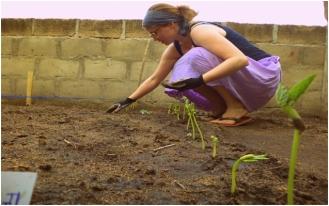 Line planting the garden
