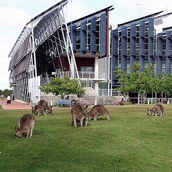 Kangaroos chillin' at campus